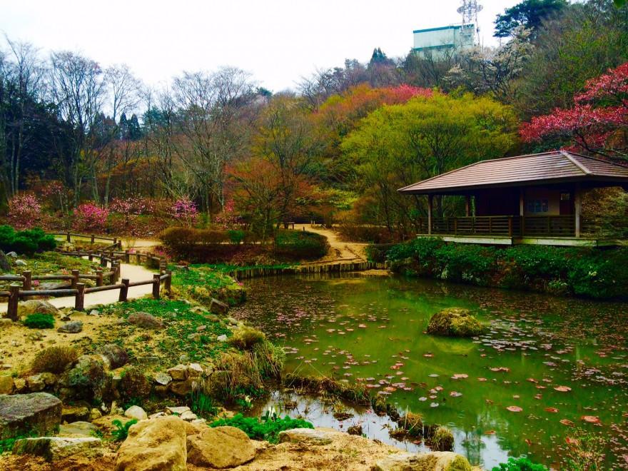 季節の草花を楽しめる六甲山高山植物園